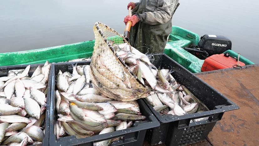 «Учитывает интересы более 20 млн человек»: Госдума приняла закон о любительском рыболовстве