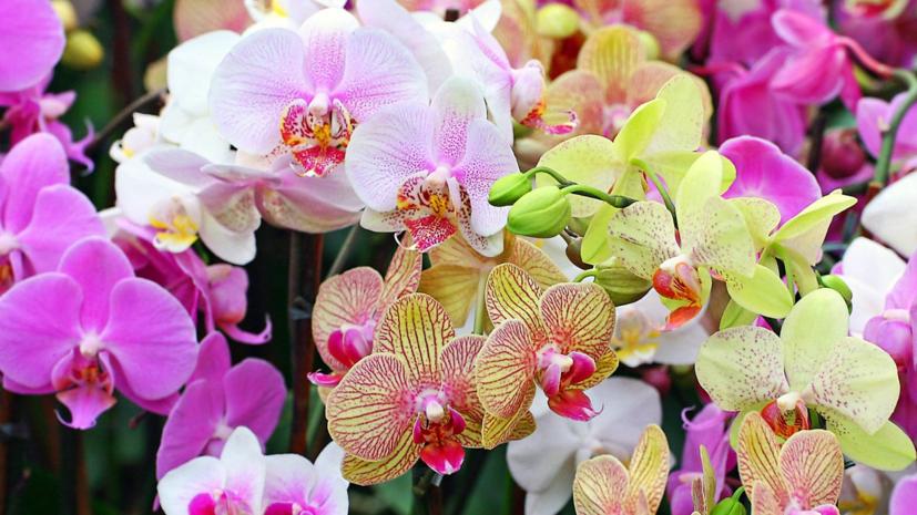 Фестиваль орхидей и хищных растений откроется 22 декабря в Москве