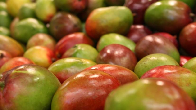 В Россельхознадзоре рассмотрят возможность поставок фруктов из Индонезии в Россию