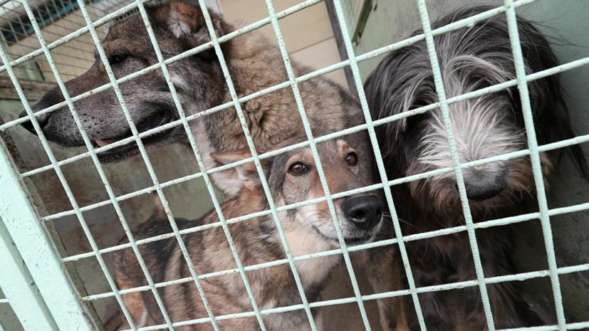 Совфед одобрил закон об ответственном обращении с животными