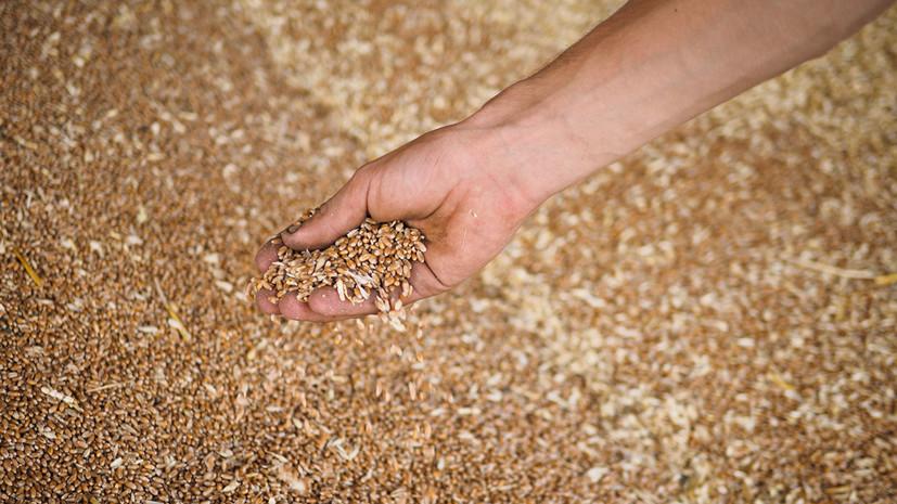 Крым экспортировал в Сириюоколо 40 тысяч тонн зерна в 2018 году
