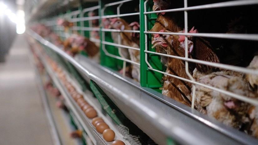 Россельхознадзор заявил о многочисленных нарушениях на трёх птицефабриках в Тюменской области