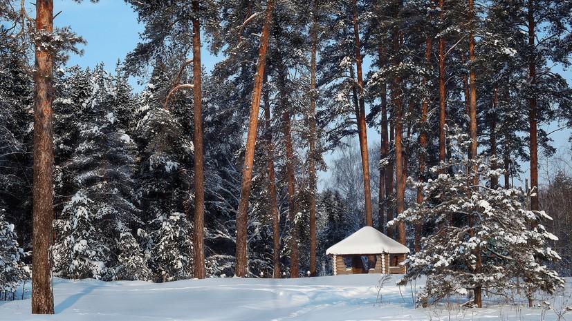 В Подмосковье запустили пилотный проект по созданию мест отдыха в лесах