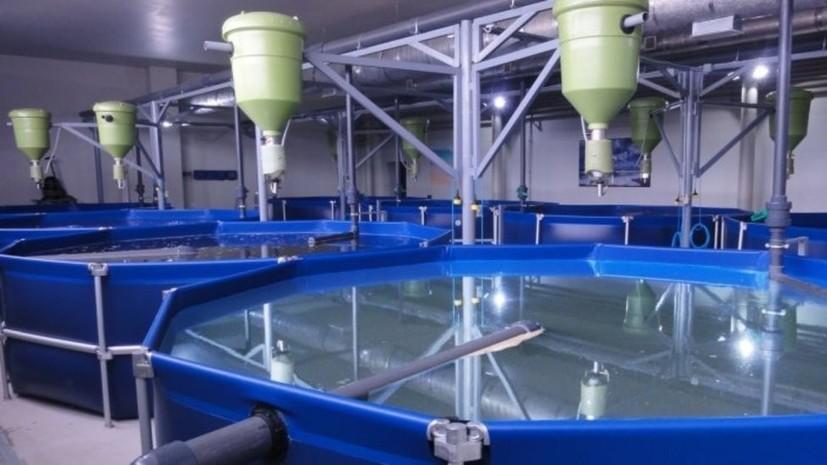В Удмуртии планируют построить завод по выращиванию пресноводной рыбы