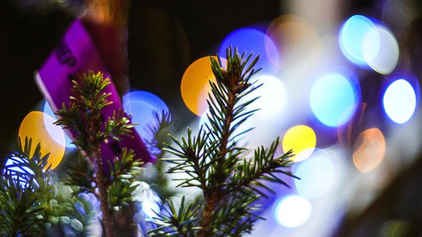 В Сочи стартовала экологическая акция по переработке новогодних елей