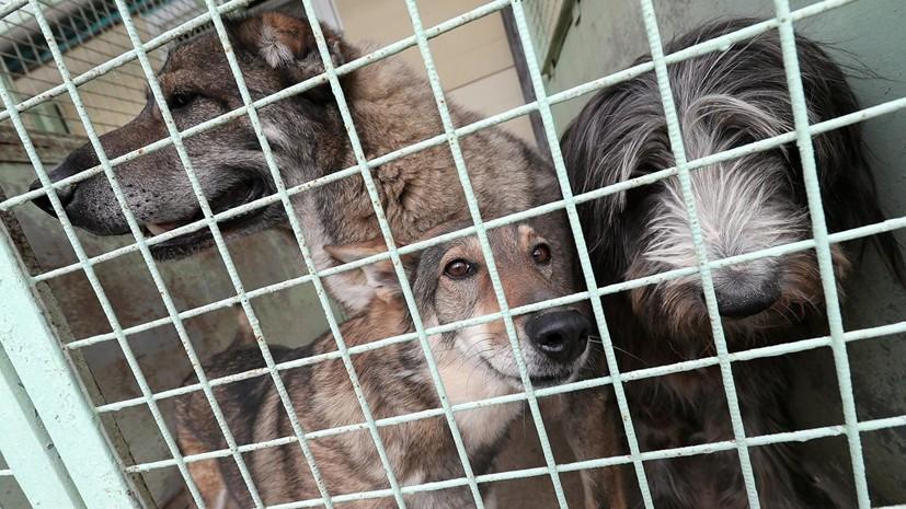 В Амурской области проводят проверку сообщений о гибели собак в приюте