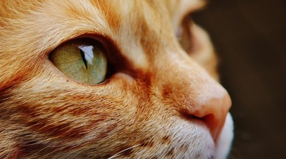 Одну из самых толстых кошек Британии вновь вернули в приют