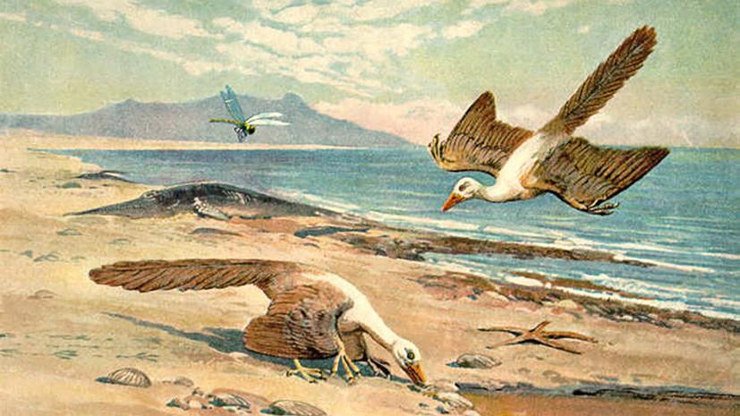 Загадка позднеюрского периода: учёные опровергли принадлежность самого древнего найденного пера археоптериксу