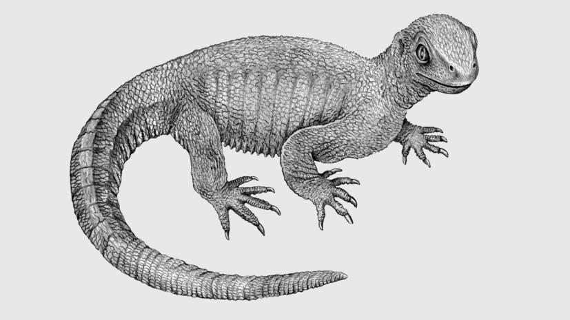 Болезнь времён динозавров: учёные обнаружили раковые клетки в останках древней рептилии