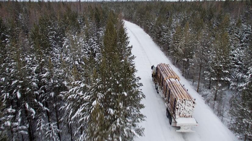 Матвиенко предложила ввести временное эмбарго на вывоз леса из России