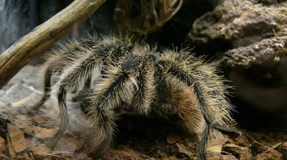 Минприроды предложило запретить держать дома ядовитых пауков и медведей