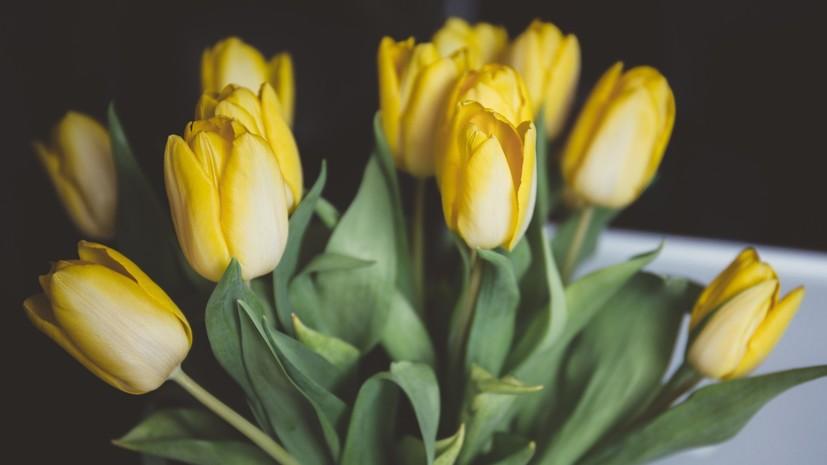 Названы траты россиян на тюльпаны в преддверии 8 Марта