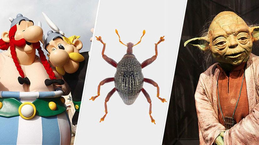 Астерикс, Обеликс и мастер Йода: энтомологи обнаружили в Индонезии 103 новых вида жуков-долгоносиков