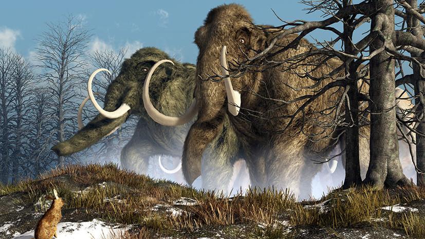 «Большой шаг к воскрешению вымерших животных»: учёные частично оживили клетки из тканей мамонта