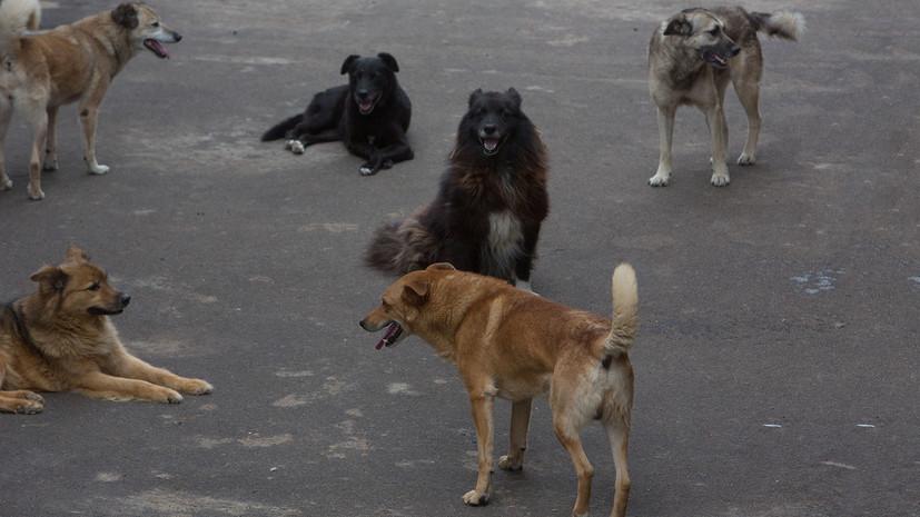 В Магадане стая бродячих собак напала на ребёнка