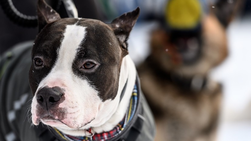 МВД России сократило перечень опасных пород собак