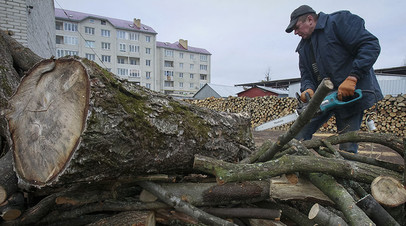Заготовка дров в городе Золочев (Львовская область)