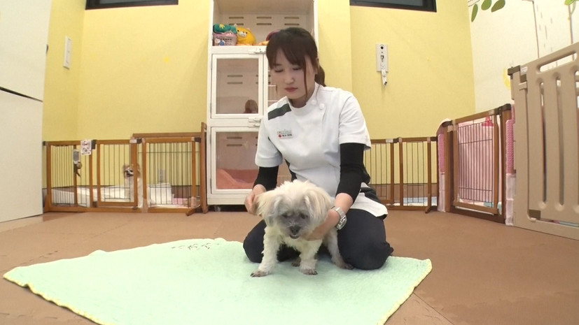 A nursing home for pets: how in Japan are caring for elderly