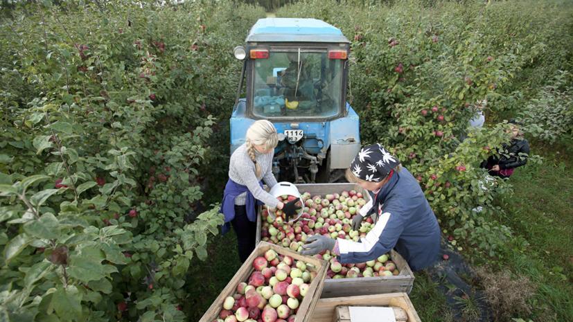 В Белоруссии готовы принять инспекцию Россельхознадзора