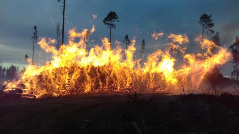 Названа вероятная причина пожара в парке «Лосиный Остров»