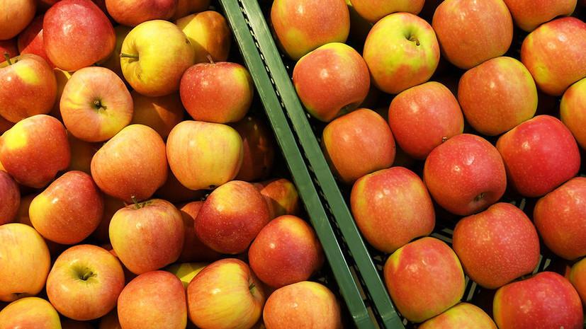 В Псковской области изъяли партию спрятанных под картошкой белорусских яблок