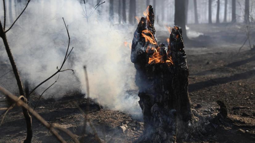 СК возбудил уголовные дела из-за масштабных пожаров в Забайкалье