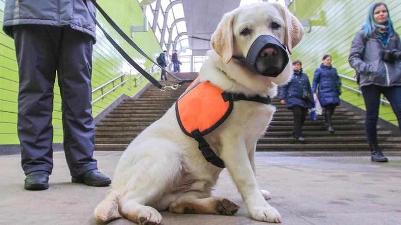 В Москве 27 апреля пройдёт акция «День с собакой-проводником»