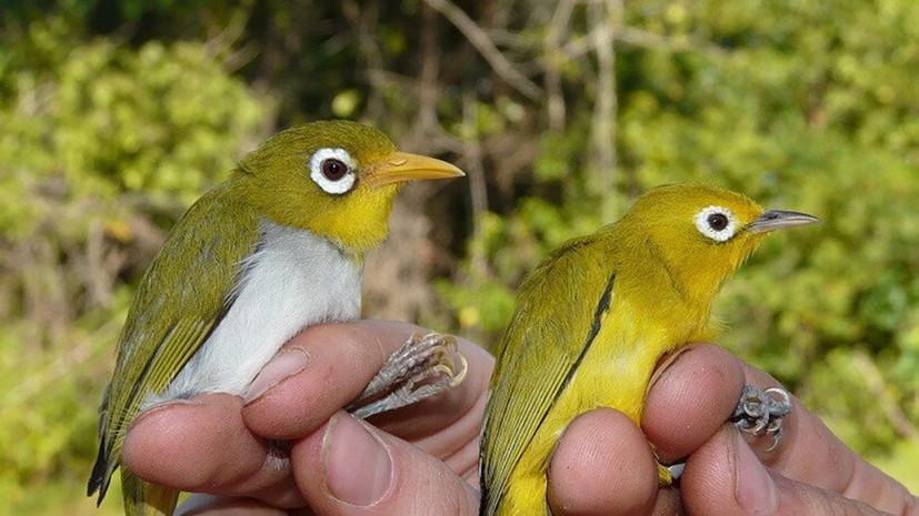«Настоящая редкость»: в Индонезии обнаружили два новых вида птиц