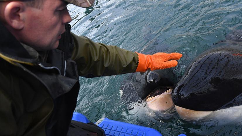 В команде Кусто оценили ситуацию в «китовой тюрьме» в Приморье
