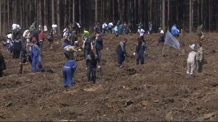 В Подмосковье рассказали о подготовке к акции «Лес Победы»