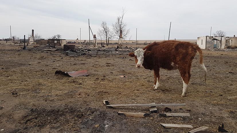 «По документам этих домов вообще не было»: что ждёт потерявших всё в степных пожарах в Забайкалье
