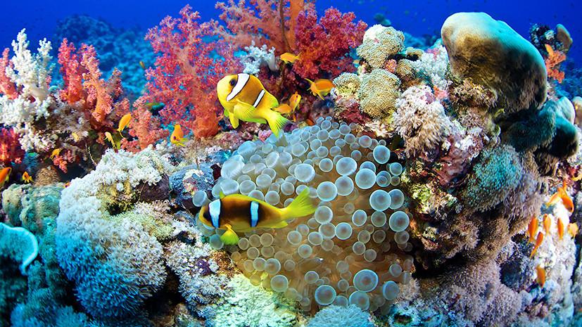 «Заглянуть в будущее»: учёные обнаружили разновидность кораллов, устойчивых к глобальному потеплению