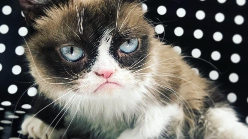 Кошка Grumpy Cat умерла