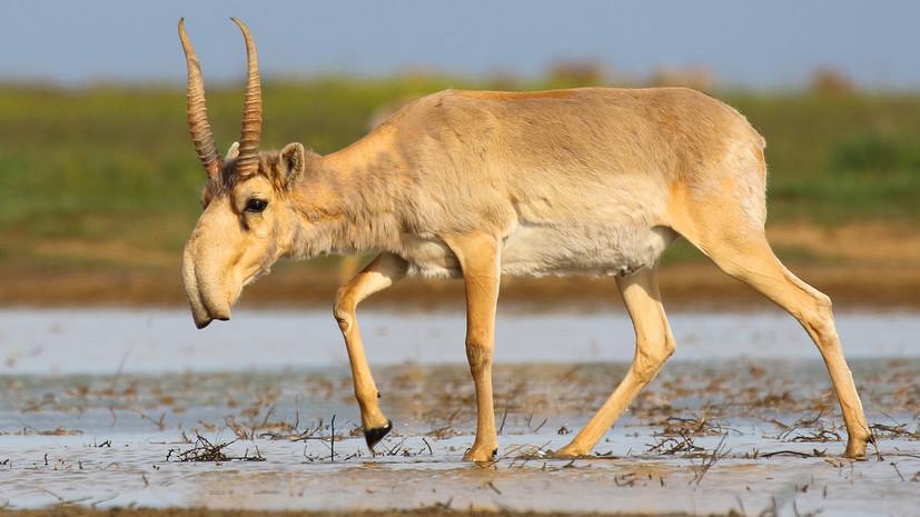 В WWF сообщили об угрозе исчезновения шести видов животных в России