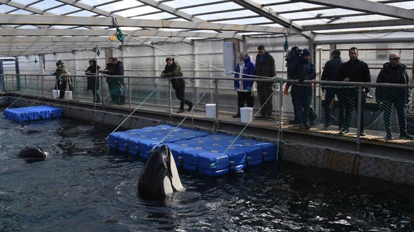Губернатор Приморья прокомментировал ситуацию вокруг «китовой тюрьмы»