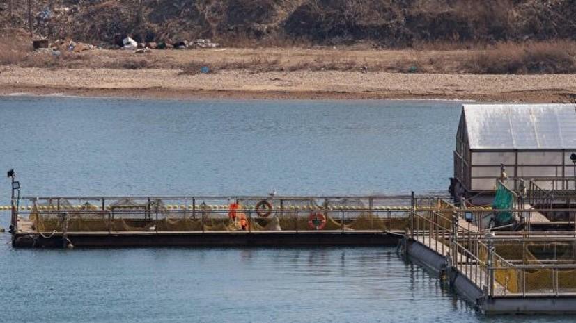 Отловщик заявил, что не собирается выпускать косаток из «китовой тюрьмы» в Приморье