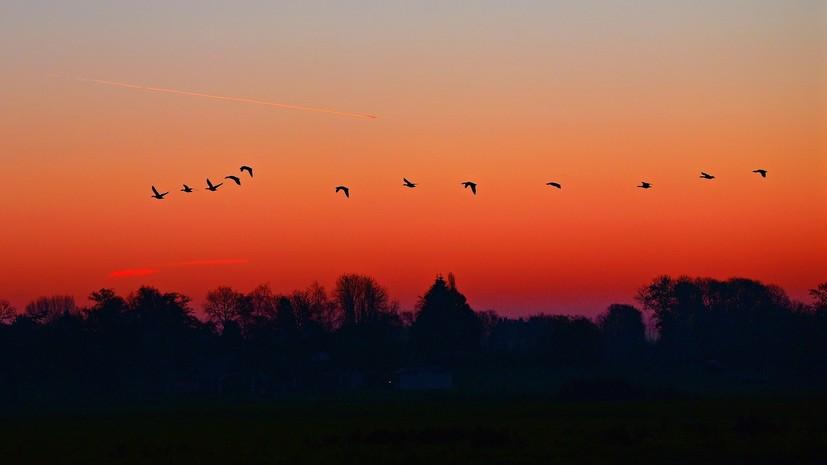 Жителя Омской области подозревают в охоте на краснокнижных птиц