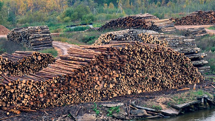 В Омской области возбудили дело по факту хищения древесины на 8 млн рублей