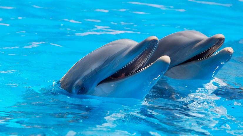 В Севастополе из дельфинария из-за пожара эвакуировали двух дельфинов