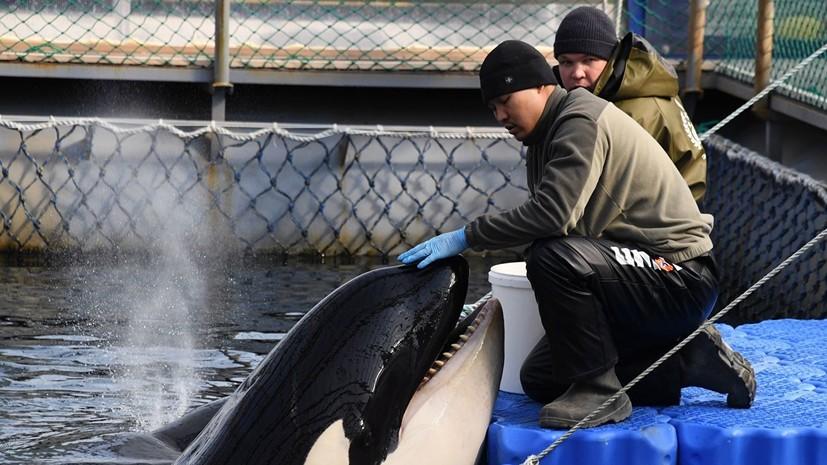 Отловщики отметили риски выпуска косаток из «китовой тюрьмы»