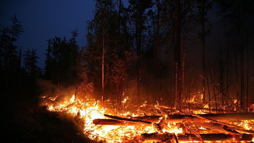 Пастух в Забайкалье сжёг 600 га леса, пытаясь разогреть еду на костре