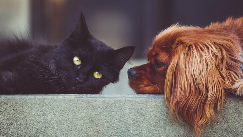 В России предложили запретить изымать домашних животных за долги