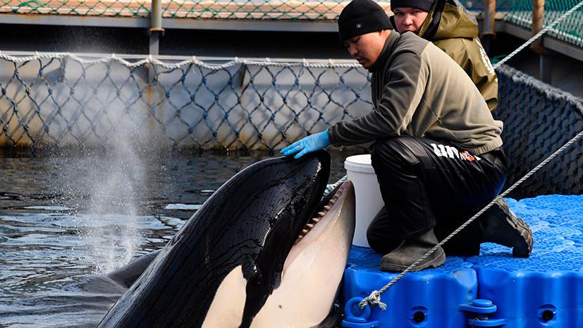 В Госдуме оценили проблему защиты китовых