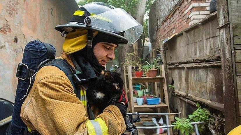 В Петербурге из горящего приюта спасли более 300 животных