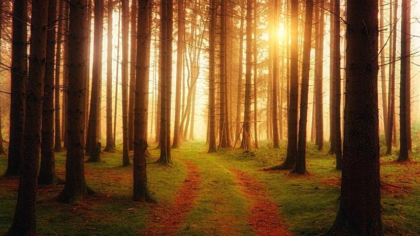 Ущерб от нарушений закона в пензенских лесах оценили в 700 млн рублей