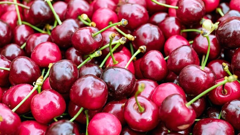 В Севастополе рассказали о планах по сбору урожая черешни в 2019 году
