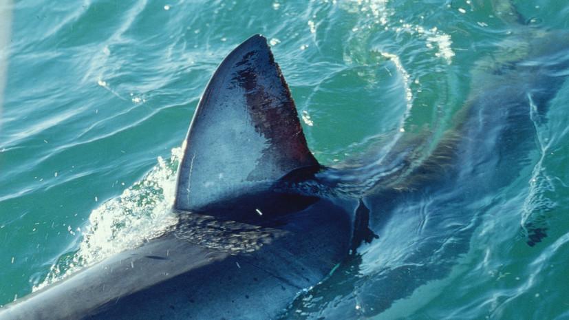 На Багамах девушка погибла после нападения трёх акул