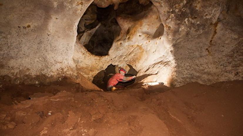 В Крыму найдена гигантская ископаемая птица