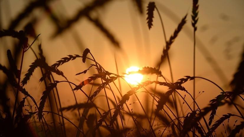 В Пензенской области ввели режим ЧС из-за почвенной засухи