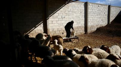 В Сирии оценили нанесённый сельскому хозяйству ущерб за пять лет
